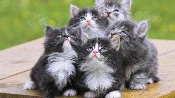 5-kittens
