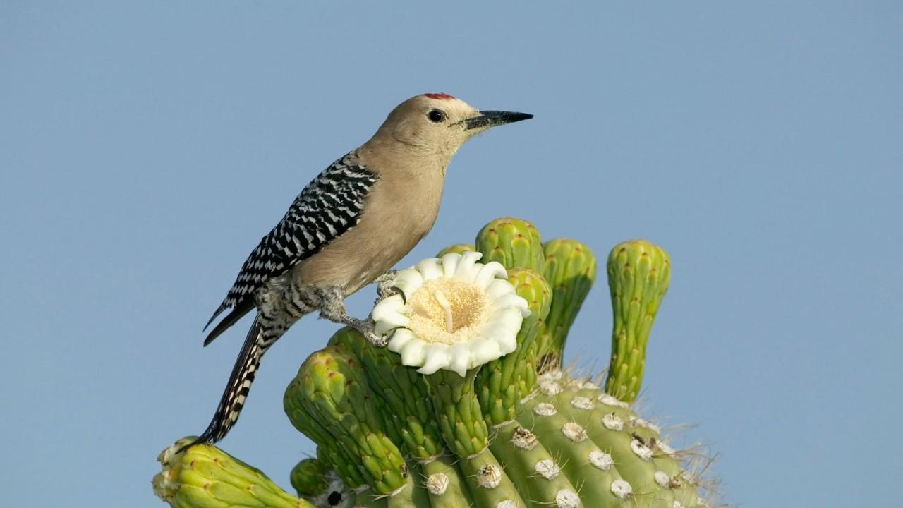 a bird on a cactus
