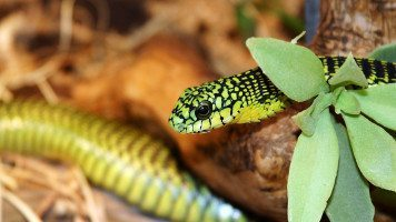 a-green-snake-2-normal