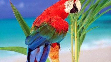 tropical-colors-parrot-normal