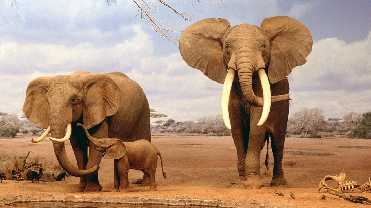 are we there yet elephants normal