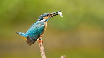 blue-bird-001