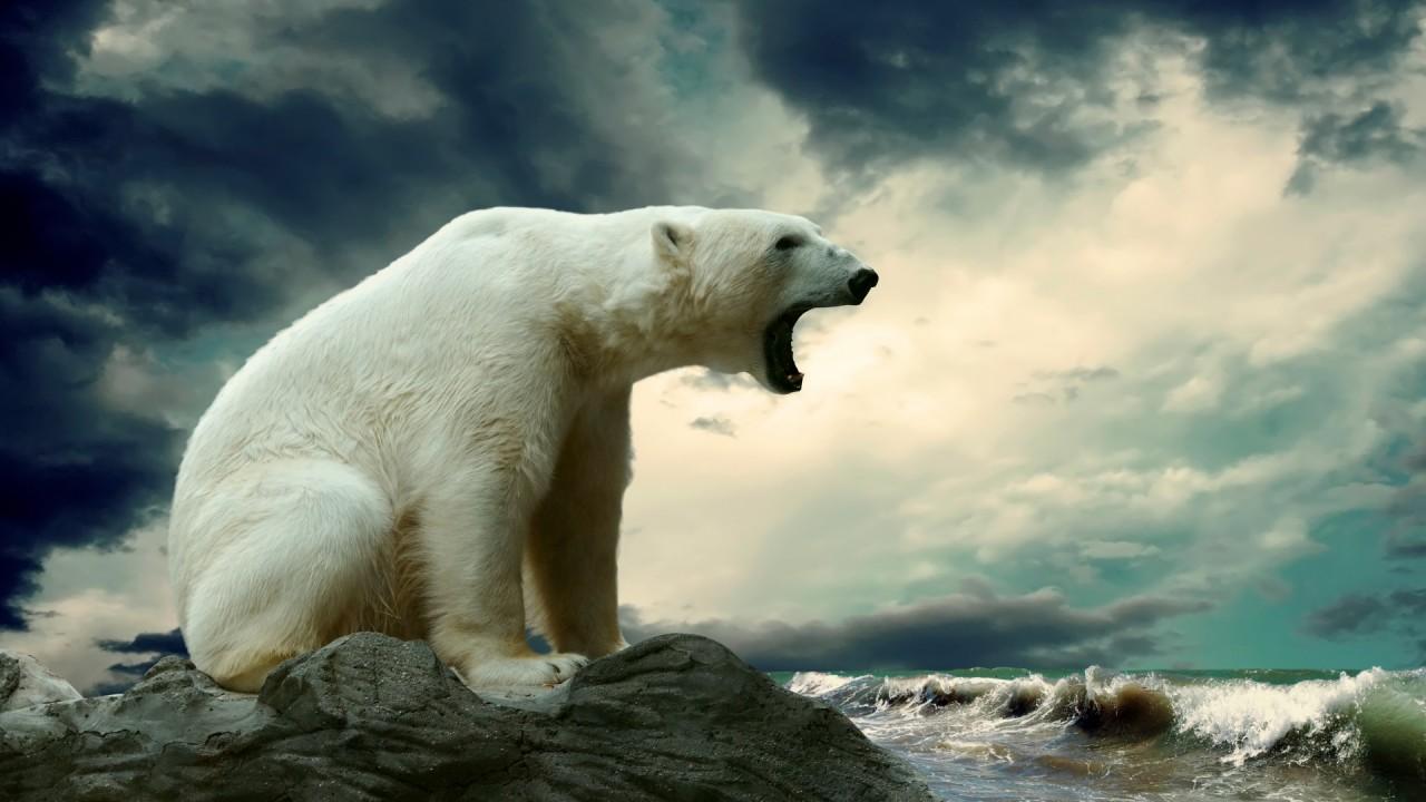 polar bear roaring