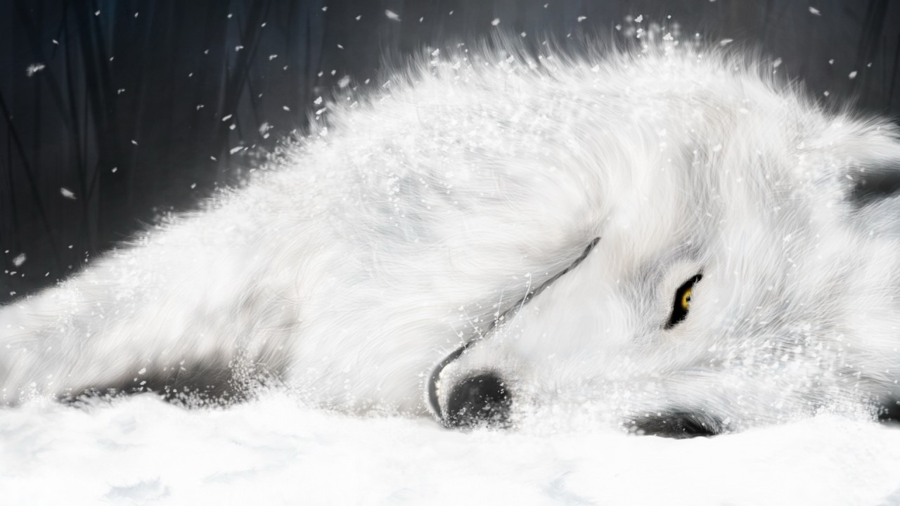 white fox in ice wide