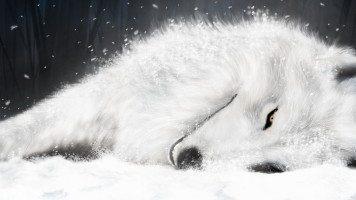 white-fox-in-ice-wide