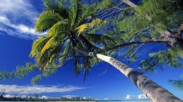 palm-tree-society-island-beach-normal