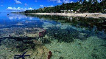 starfish-along-the-coral-coast-beach-normal