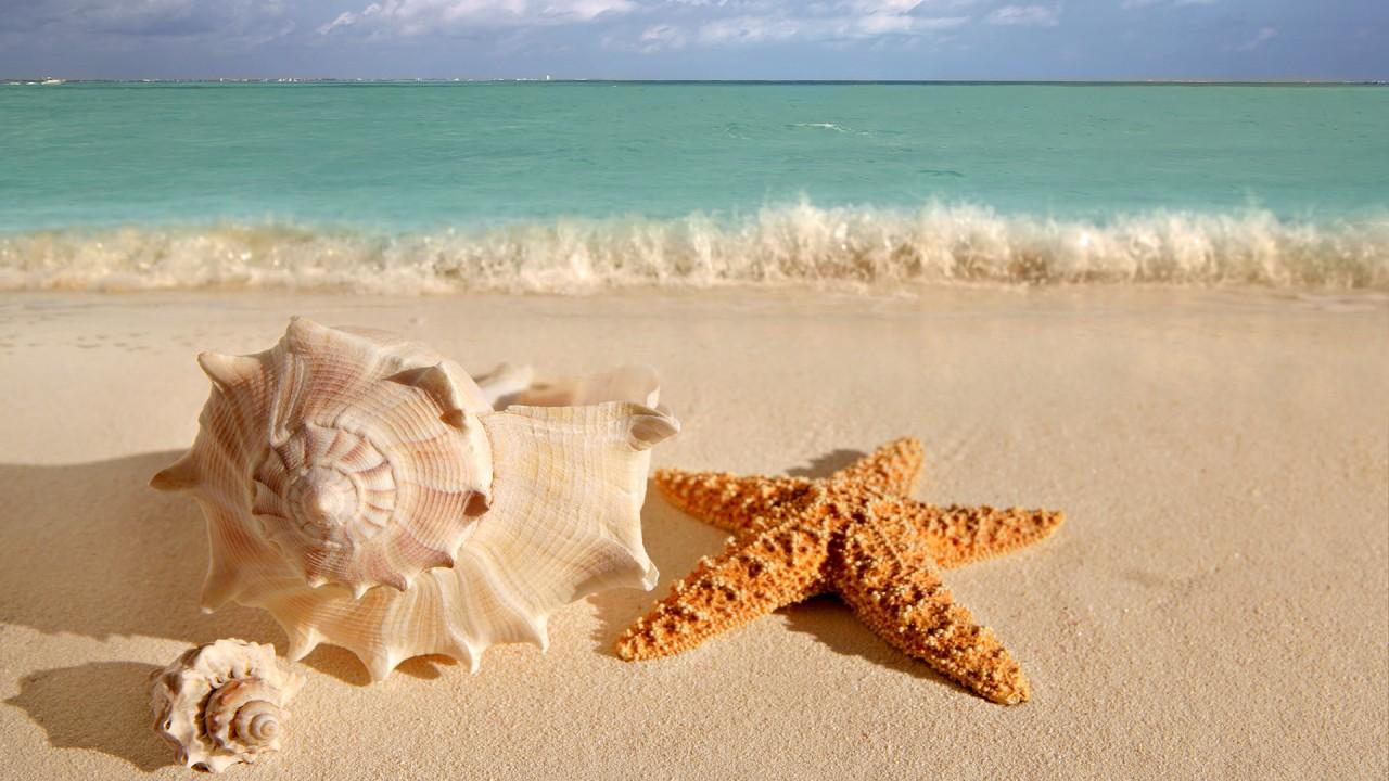 hd wallpaper beach starfish