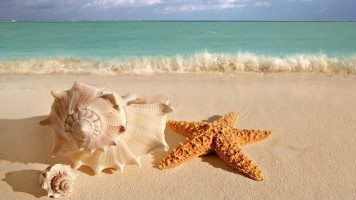 hd-wallpaper-beach-starfish