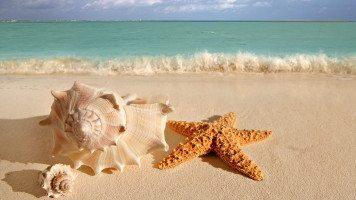 hd-wallpaper-beach-starfish