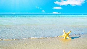 hd-wallpaper-summer-flower-beach