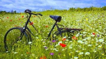 hd-wallpaper-bicycle-fragrand-flowers