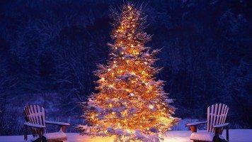 hd-wallpaper-christmas-tree-snow