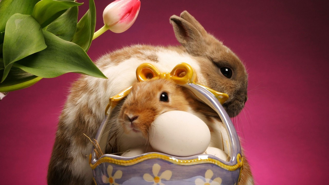 Easter Bunnies And Eggs hd wallpaper