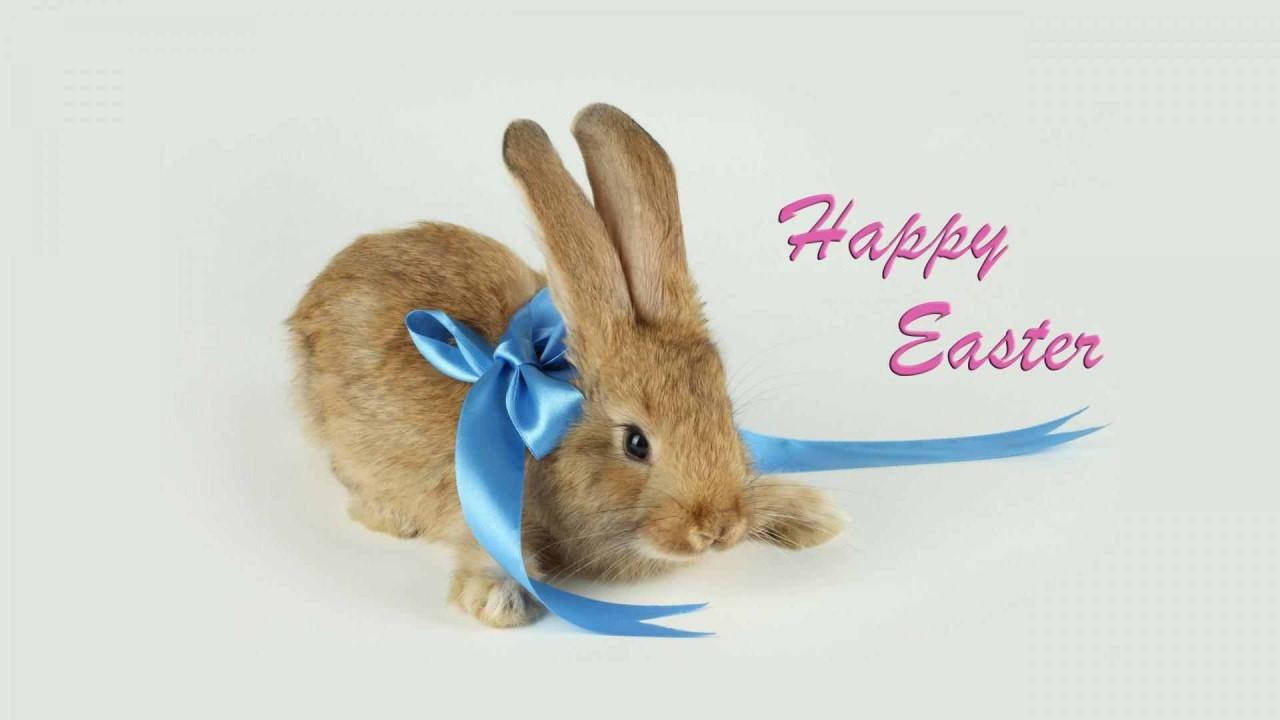 hd wallpaper happy easter bunny