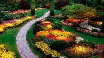beautiful-flowers-british-hd-wallpaper