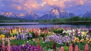 beautiful-flowers-hd-wallpaper