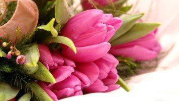 beautiful-flowers-pack-hd-wallpaper