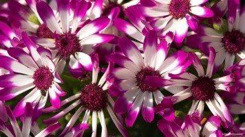 beautiful-purple-flowers
