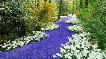 flower-park-awesome-hd-wallpaper