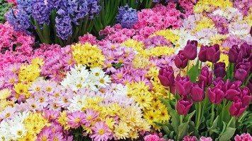 flowers-garden-hd-wallpaper