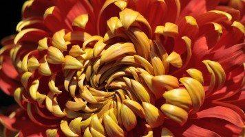 flowers-hd-wallpaper