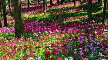 hd-wallpaper-flower-background