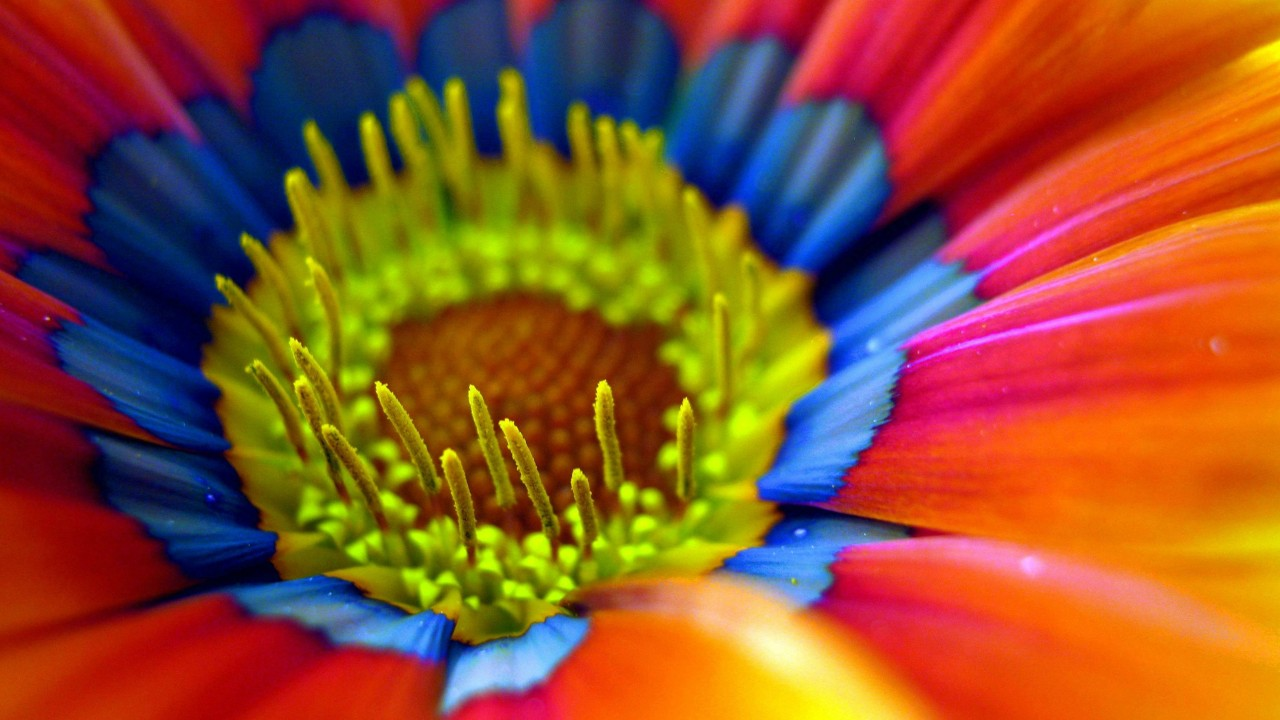 A colorful flower
