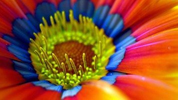 A-colorful-flower