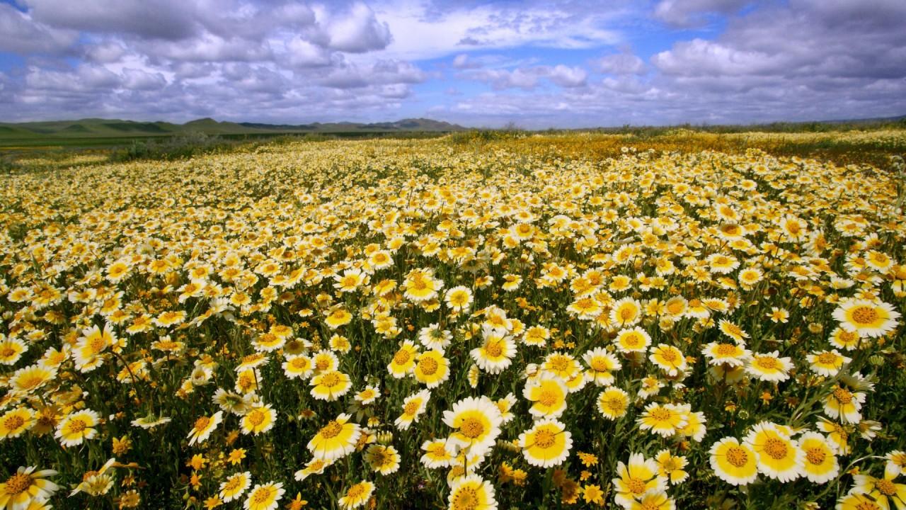 hd wallpaper landscapes flowers california national monument plain
