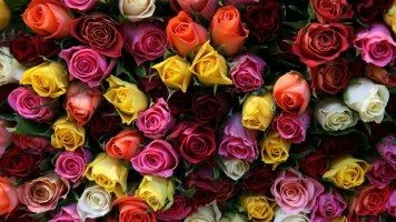 hd-wallpaper-roses-flowers-bouquet
