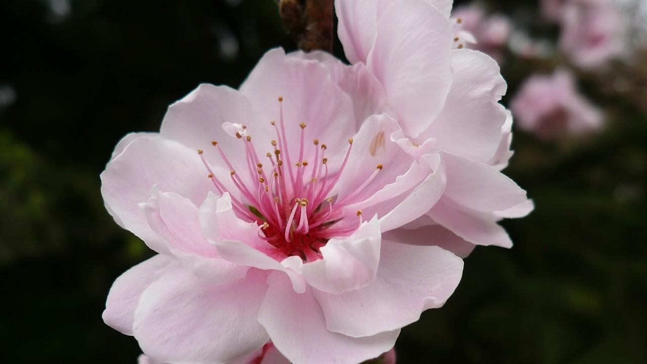nice rose flower