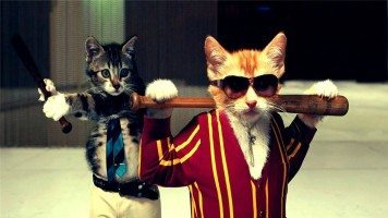 funny-cats-hd-wallpaper