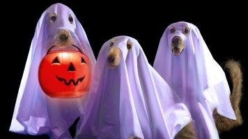 funny-halloween-hd-wallpaper