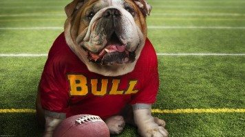 hd-wallpaper-Funny-Doggy-Football-Time-fun-wallpapers-funny-wallpapers-cute