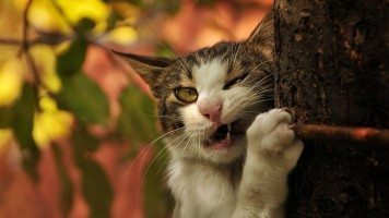 hd-wallpaper-funny-cat-bite
