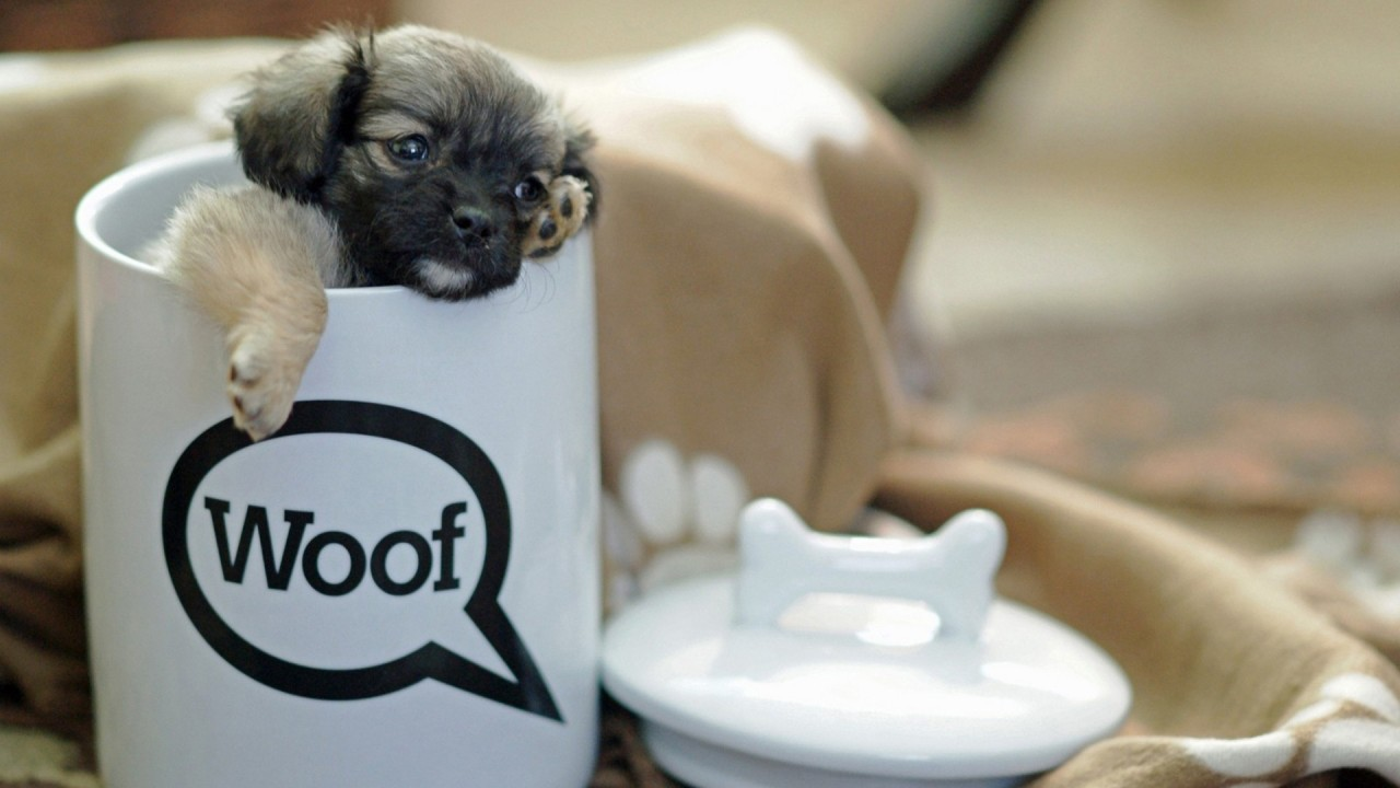 puppy in a large cup