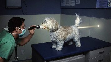 puppy-visit-to-doctor