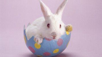 rabbit-in-the-Egg