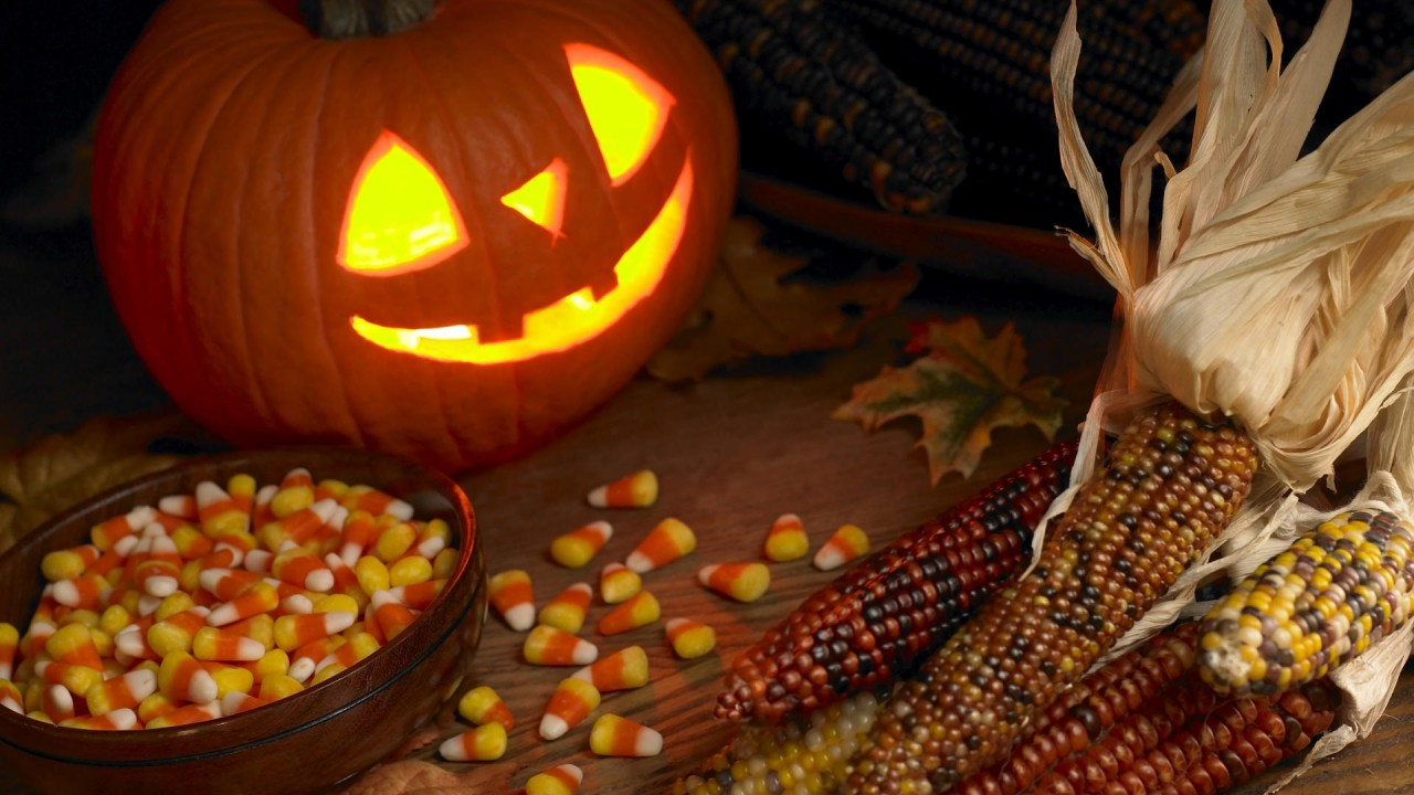 hd wallpaper funny halloween