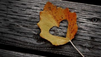 hd-wallpaper-love-leaf