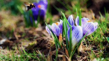 bee-flying-to-flower