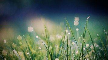 blades-of-grass