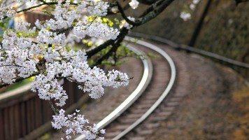 flowers-over-railroad-tracks