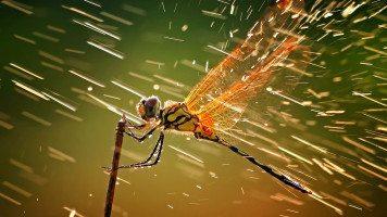 hd-wallpaper-dragonfly-and-water-macro