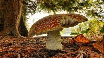 hd-wallpaper-mushroom-macro
