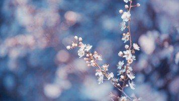 Macro-flower