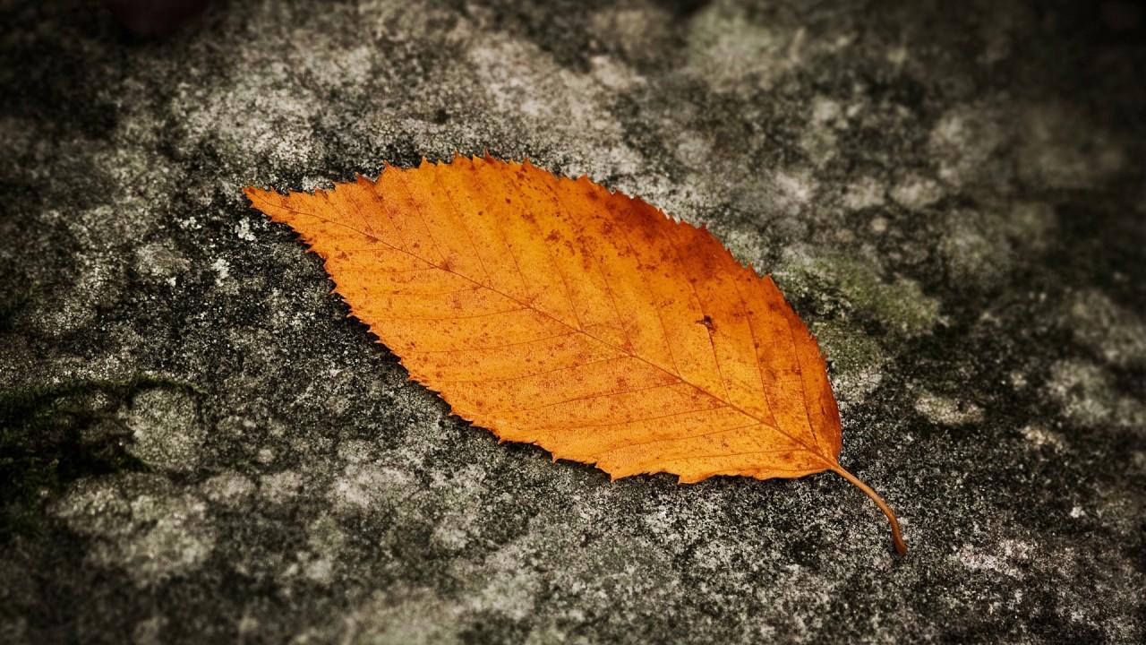 leaf macro hd wallpaper