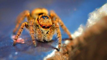 macro-photography-spider-hd-wallpaper