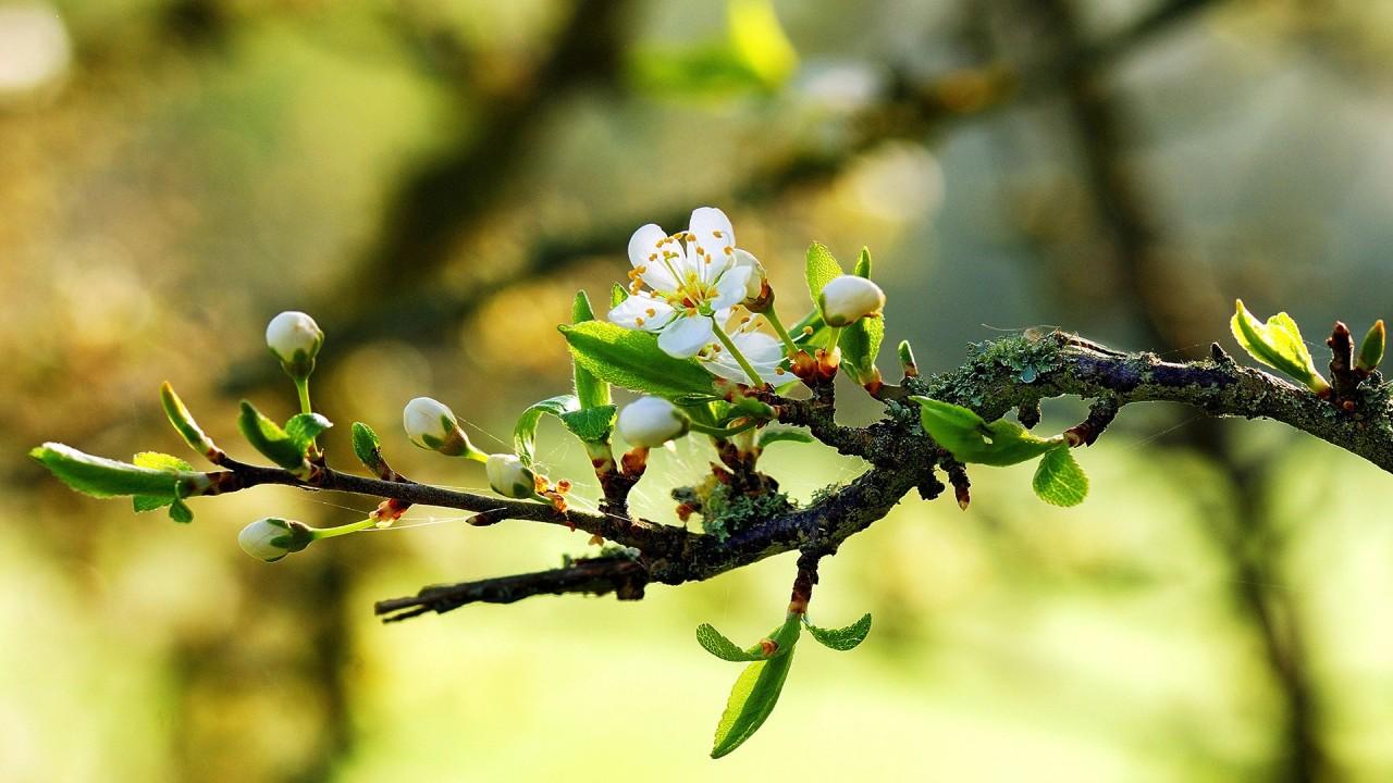 nature macro flowers hd wallpaper